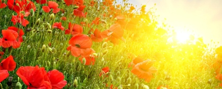 poppies_meadow_sun_rays_summer_68999_2560x1024